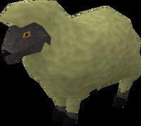 Sick looking sheep 4