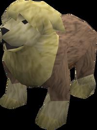 Sheepdog (yellow) pet