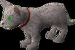 Pet kitten (white) pet