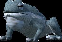 Barker toad (Familiarisation)