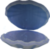 Oyster (Tutorial Island) (open)