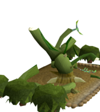 Wild jade vine 4