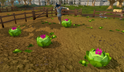 Cabbages with partyhats