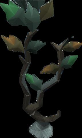 File:Seeping elm tree.png