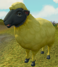 Sick-looking sheep (4) (dyed)