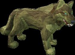 Desert wolf