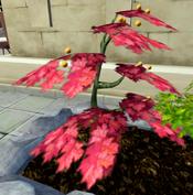 Smoulderberry bush