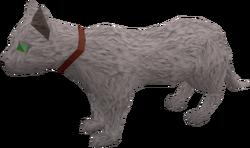 Pet cat (white) pet