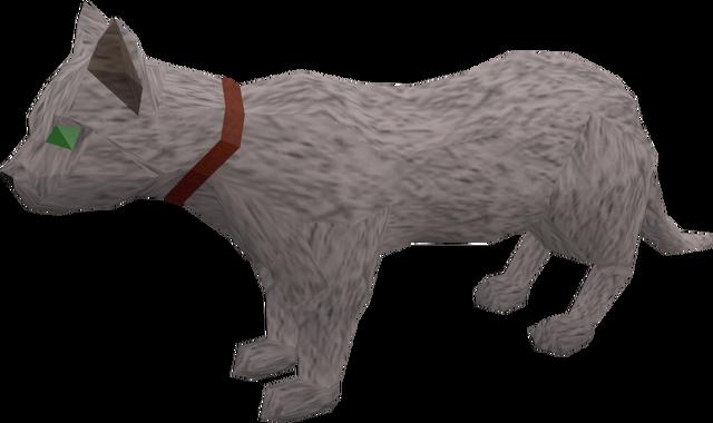 File:Pet cat (white) pet.png
