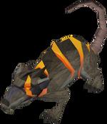 Rat Warped