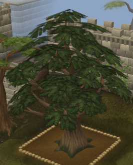 File:Yew10.png