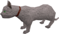Overgrown cat (white) pet.png