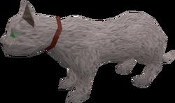 Overgrown cat (white) pet
