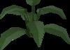 Large leaf bush built