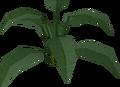 Large leaf bush built.png