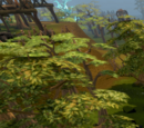 Tree Gnome Stronghold Hunter area