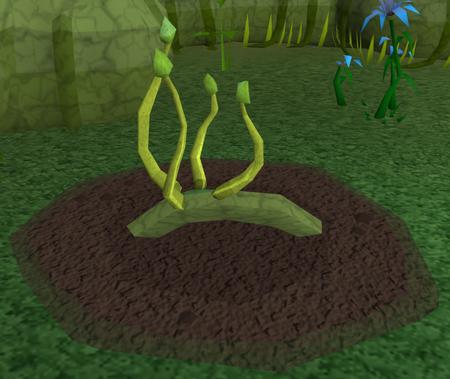 Green vine blossom4