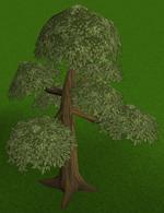 Yew tree built