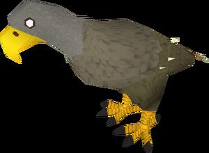 Karamjan Jungle eagle