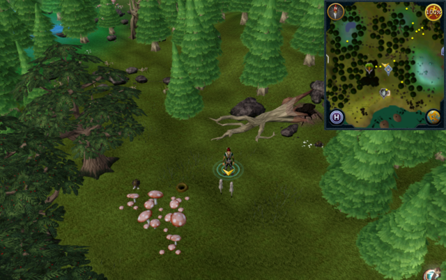 File:Scan clue Tirannwn north of mushroom patch.png