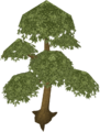 Yew tree (Historical).png