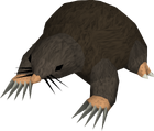 Giant mole old