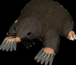 Giant mole old