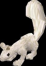Baby squirrel (white) pet