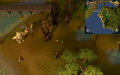 Compass clue Castle Wars in Chompy Bird Hunting area.png