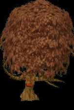 Maple tree ent