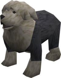 Sheepdog (black) pet
