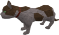 Overgrown cat (white and brown) pet.png