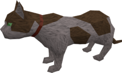 Overgrown cat (white and brown) pet