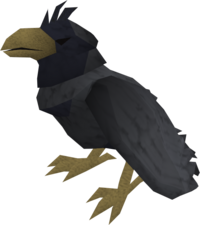 Raven (black crested) pet