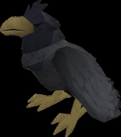 File:Raven (black crested) pet.png