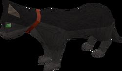 Pet cat (black) pet