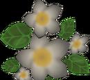 Lush blossoms (2014)