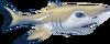 Shark (Aquarium)
