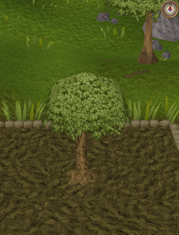 File:Spirit tree6.png