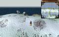 Scan clue Fremennik Isles north of land bridge connecting two snowy islands.png