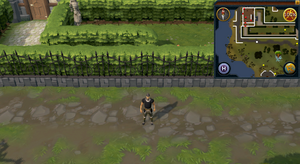Compass clue Falador south of Witch's house