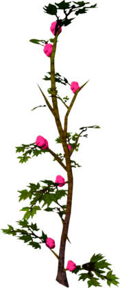 Rosaberry bush