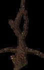 Dead tree ent