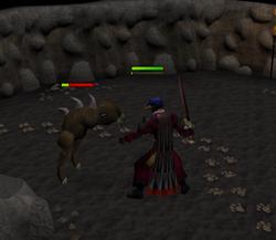Kebbit fight