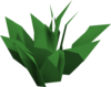 Green herb detail