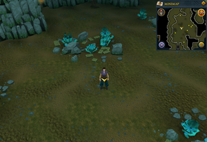 Scan clue Brimhaven Dungeon lower level in the centre of the Moss Giants chamber