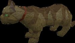Overgrown cat (brown) pet