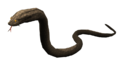 Swamp Snake.png