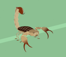 Scorpion-wild kratts