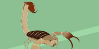 Scorpion (Wild Kratts)